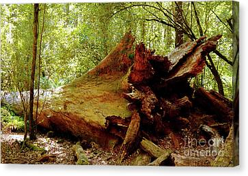 Giant Has Lived Its Life Canvas Print