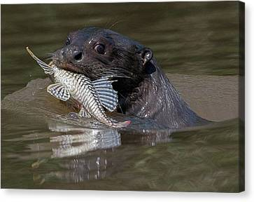 Canvas Print featuring the photograph Giant Otter #1 by Wade Aiken