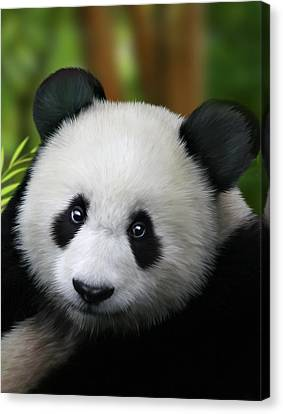 Panda Canvas Print - Giant Panda by Julie L Hoddinott