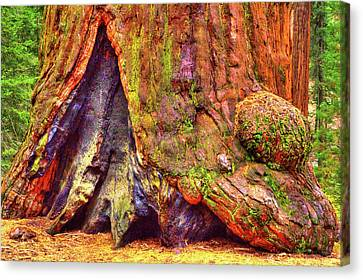 Giant Sequoia Base With Fire Scar Canvas Print