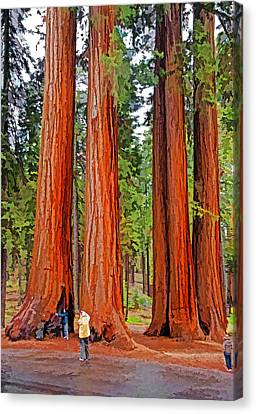 Giant Sequoias Canvas Print by Dennis Cox