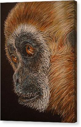 Monkey Canvas Print - Gibbon by Karen Ilari