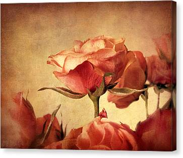 Gilded Roses Canvas Print by Jessica Jenney