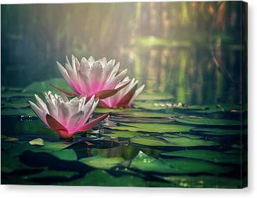Aquatic Plant Canvas Print - Gilding The Lily by Carol Japp