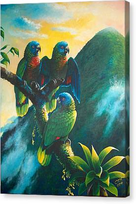 Gimie Dawn 1 - St. Lucia Parrots Canvas Print by Christopher Cox