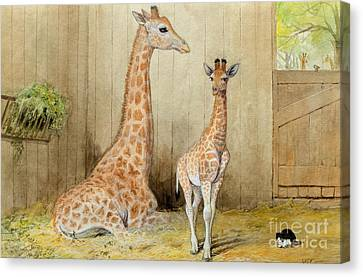 Giraffe And Young Canvas Print