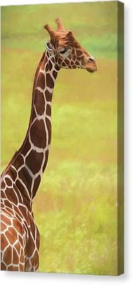 Giraffe - Backward Glance Canvas Print