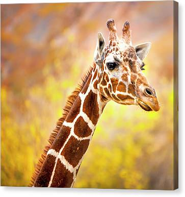 Giraffe Large Canvas Art, Canvas Print, Large Art, Large Wall Decor, Home Decor, Wall Art Canvas Print by David Millenheft
