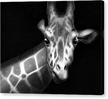 Giraffe In Black And White Canvas Print