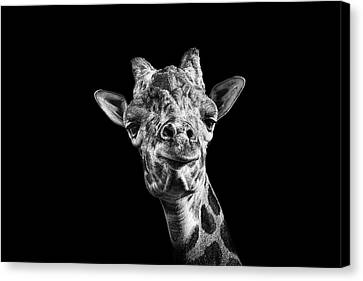 Giraffe In Black And White Canvas Print by Malcolm MacGregor