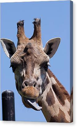 Canvas Print featuring the photograph Giraffe by JT Lewis
