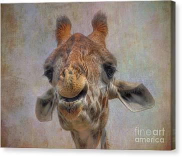 Canvas Print featuring the photograph Giraffe by Savannah Gibbs
