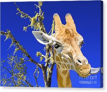 Giraffe Up Close. Original Exclusive Photo Art. Canvas Print by Geoff Childs