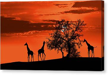Giraffes At Sunset Canvas Print by Jaroslaw Grudzinski