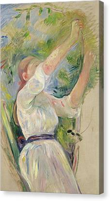 Girl Gathering Cherries Canvas Print by Berthe Morisot