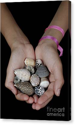 Girl Holding Shells In Clasped Hands Canvas Print by Sami Sarkis