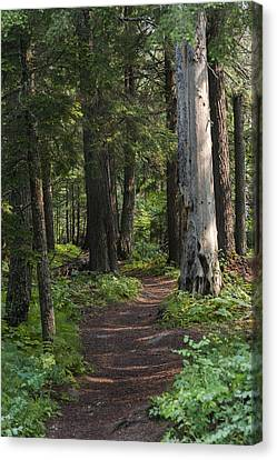 Canvas Print featuring the photograph Glacier National Park Woodland Trail by Kevin Blackburn
