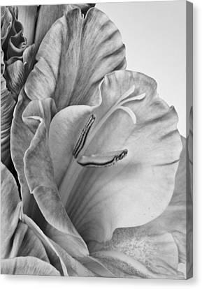Gladiola In Grays Canvas Print by David and Carol Kelly