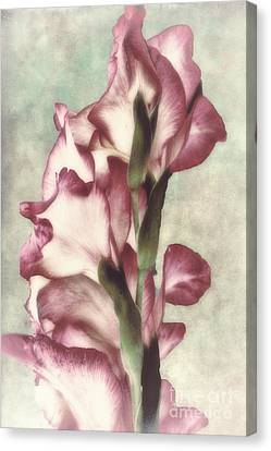 Gladiola Canvas Print by Mindy Sommers