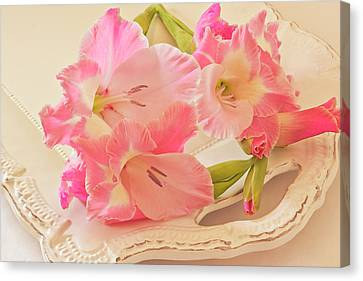 Gladiolas In Pink Canvas Print by Sandra Foster