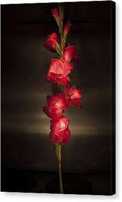 Canvas Print featuring the photograph Gladioli_variation#4 by Richard Wiggins
