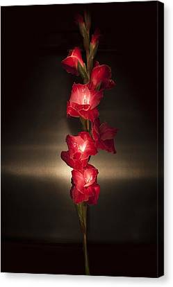 Canvas Print featuring the photograph Gladioli_variation#8 by Richard Wiggins