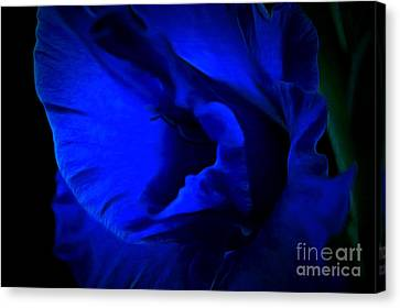 Gladiolus Of Blue Canvas Print by Krissy Katsimbras