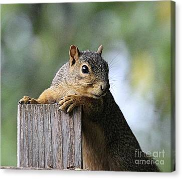 Southern Indiana Autumn Canvas Print - Glamour Shots - Squirrel Portrait by Scott D Van Osdol