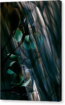 Glass Transparency Canvas Print by Marsha Tudor