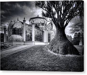 Glasshouse And Tree Canvas Print by Wayne Sherriff