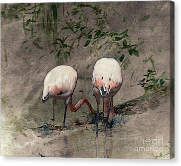 Pittsburgh Zoo Canvas Print - Gleaners by Arne Hansen