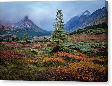 Canvas Print featuring the photograph Glen Alps In The Autumn Rain by Tim Newton