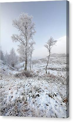 Canvas Print featuring the photograph Glen Shiel Misty Winter Trees by Grant Glendinning