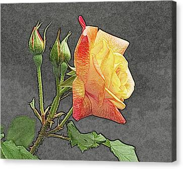 Glenn's Rose 2 Canvas Print by Michael Peychich