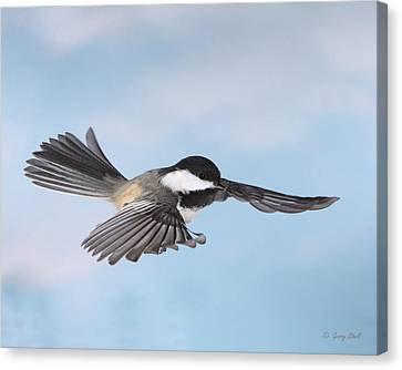 Canvas Print featuring the photograph Gliding by Gerry Sibell