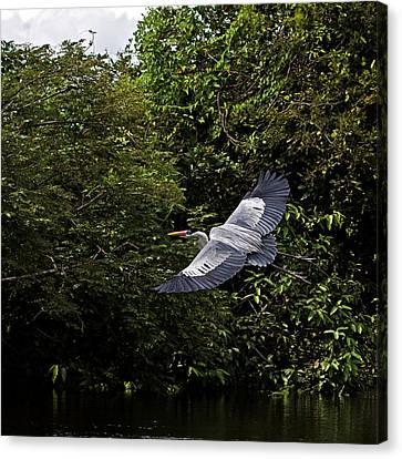 Gliding Canvas Print by Ron Dubin