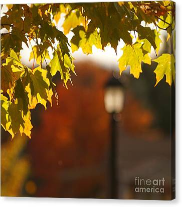 Canvas Print featuring the photograph Glimpse Of Autumn by Aimelle