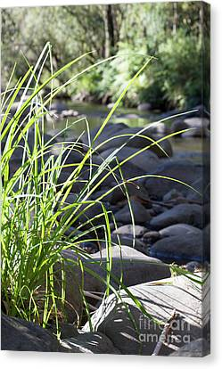 Canvas Print featuring the photograph Glistening In The Sunlight by Linda Lees