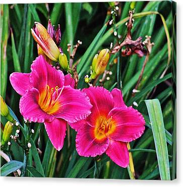 Glorious Daylilies Canvas Print