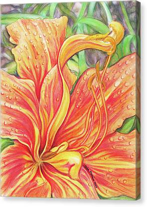 Glorious Daylily Canvas Print by Carla Parris
