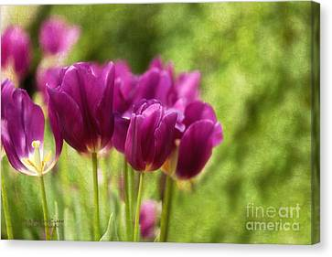 Glorious Days Canvas Print by Beve Brown-Clark Photography