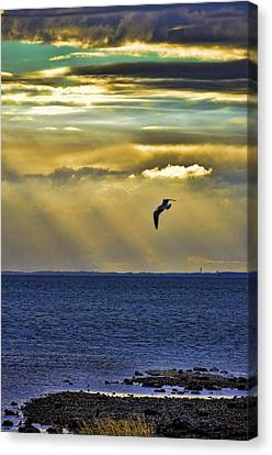 Canvas Print featuring the photograph Glorious Evening by Jan Amiss Photography