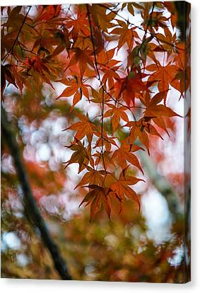 Glorious Fall Colors Canvas Print by Mike Reid