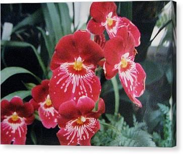 Canvas Print featuring the photograph Glorious Fleur by Judyann Matthews
