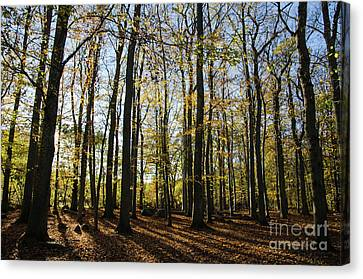 Canvas Print featuring the photograph Glorious Forest by Kennerth and Birgitta Kullman