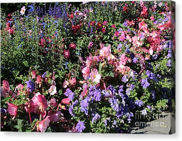 Blue Begonia Canvas Print - Glorious Garden by Carol Groenen