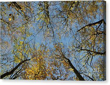 Canvas Print featuring the photograph Glorious Tree Tops by Kennerth and Birgitta Kullman
