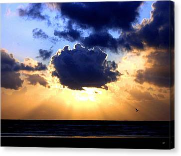 Canvas Print featuring the photograph Glorious  by Will Borden
