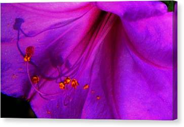 Canvas Print featuring the photograph Glory And Hallelujah by Lenore Senior