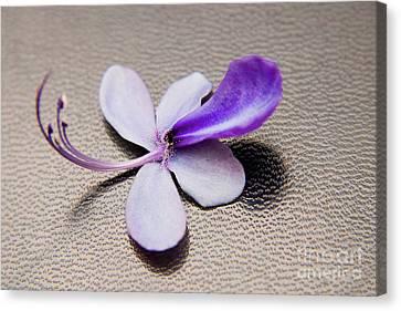 Glorybower Patio Tree Flower Canvas Print by Julia Hiebaum